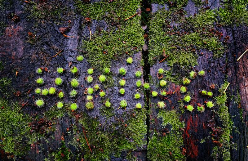 Hiking word made from outdoor on a mossy wooden surface royalty free stock images
