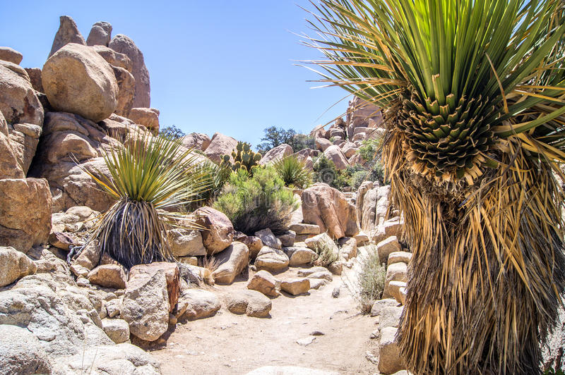 Hikking Trail through stones, Joshua Tree. Hidden Valley, Joshua Tree National Park royalty free stock photography