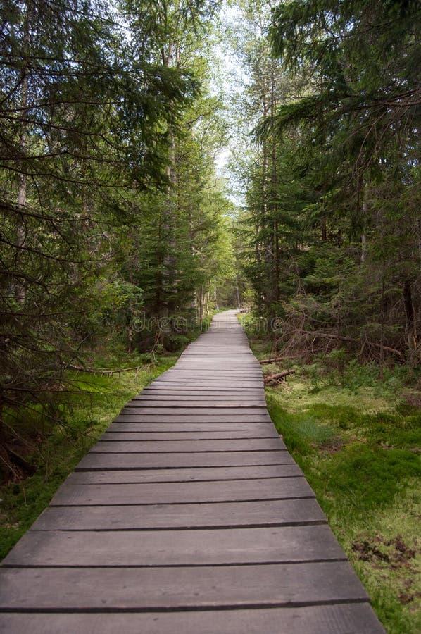 Hilada a través del bosque foto de archivo libre de regalías