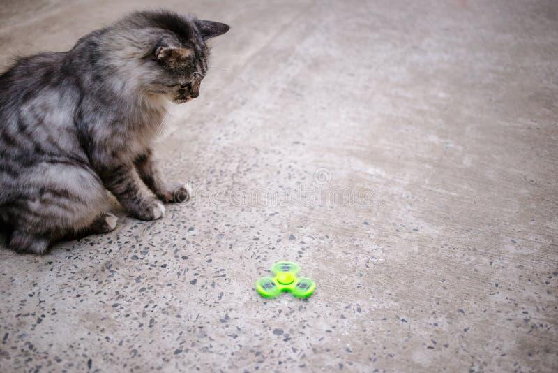 Hilandero y gato verdes de la persona agitada imagen de archivo
