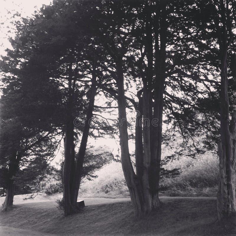 Hilera de árboles imagenes de archivo