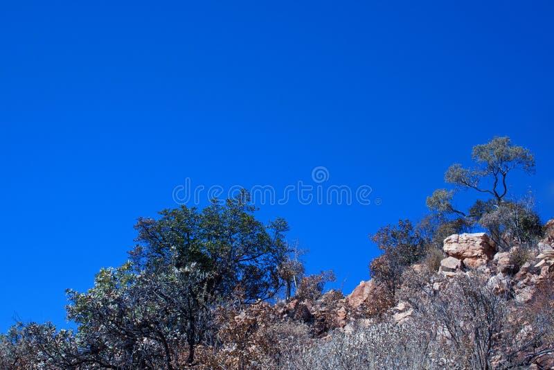 HILERA DE ÁRBOLES CONTRA EL CIELO AZUL EN LA CUESTA DE UNA COLINA imagen de archivo libre de regalías