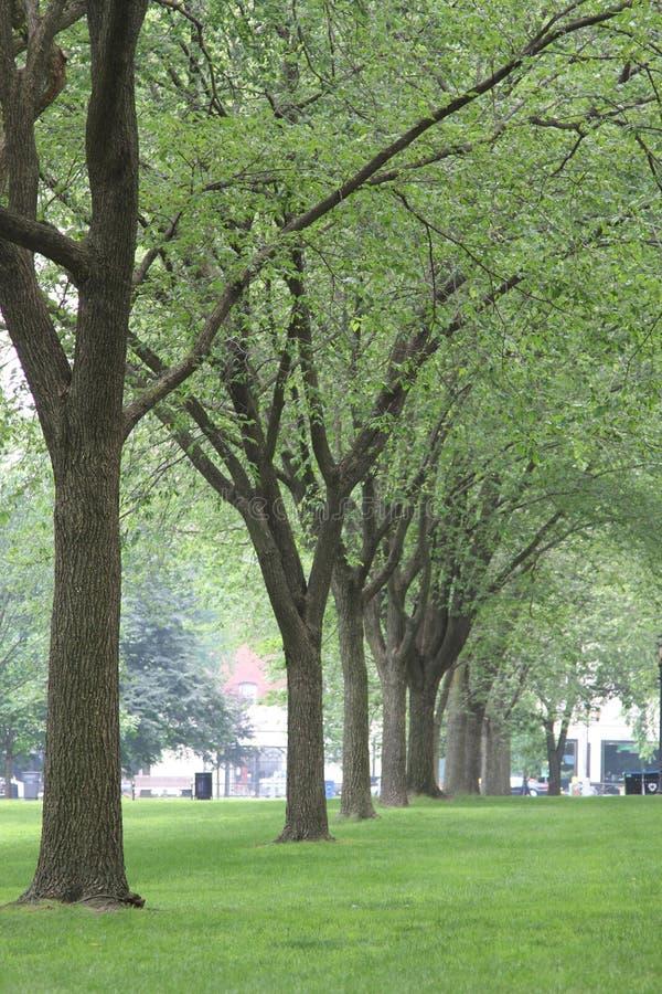 Hilera de árboles Yale adentro en campus universitario imagen de archivo