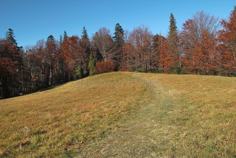 Hill με το δάσος και το ξέφωτο, Gorce, Πολωνία στοκ εικόνα με δικαίωμα ελεύθερης χρήσης