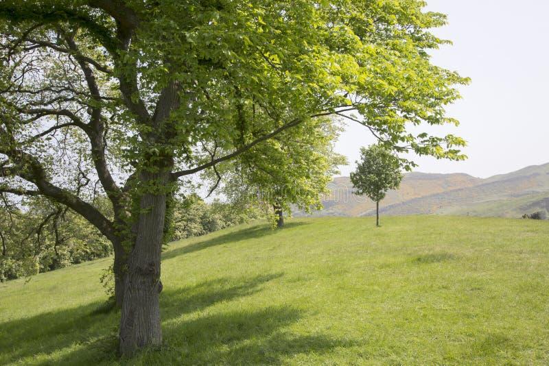Hill του Carlton  Εδιμβούργο στοκ φωτογραφία