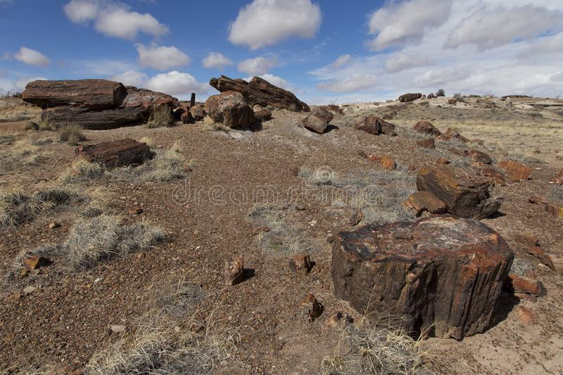 Hill covered in small and large chunks of petrified wood at the southern part of Petrified Forest National Park. In winter, northeastern Arizona stock photo