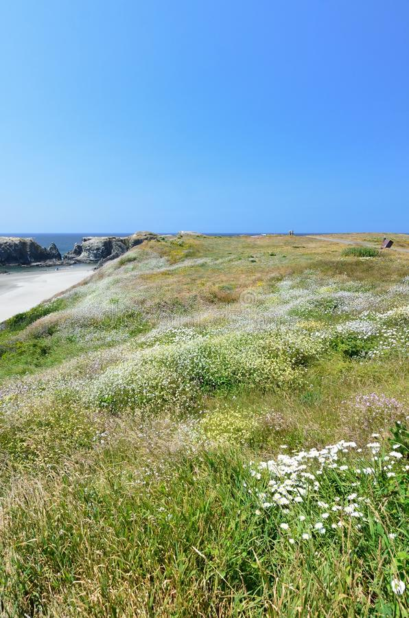 Hill Covered With Wild Flowers Overlooking Beach Bandon, Oregon USA stock photos