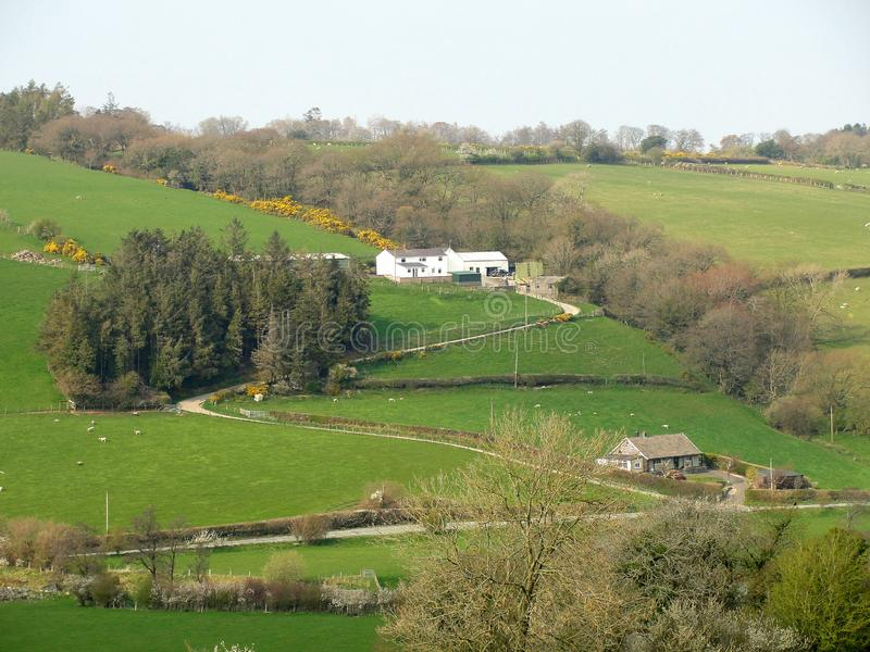 Hill farm, with lush meadows, pine trees and a winding approach road. stock photo