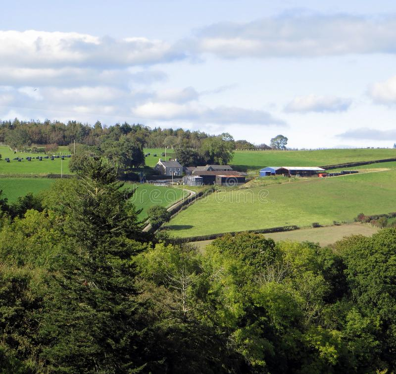 Hill farm, on verdant slopes. A hill farm, on lush green slopes, meadows and trees, signs of work in silage packed in black plastic royalty free stock image