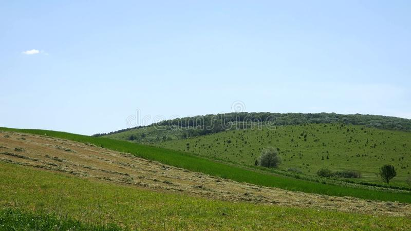 Hill with green trees and fields stock photo