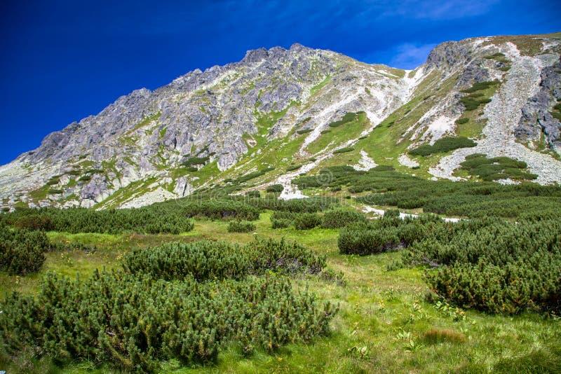 Hill in High Tatras, Slovakia stock image