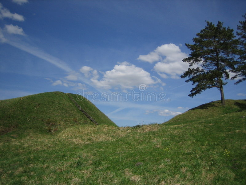 Hill with pine royalty free stock photo