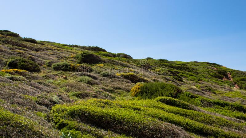 Hill slope covered with grass royalty free stock images