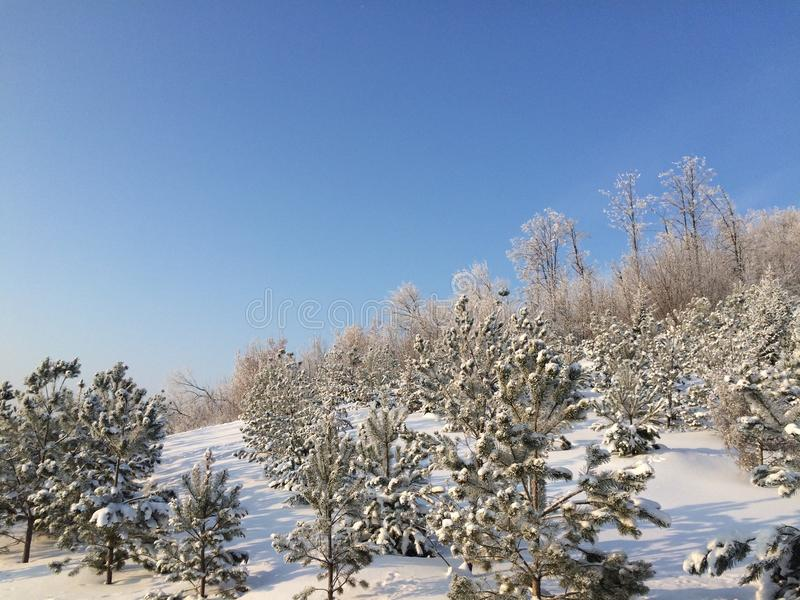 Hill during snow and freeze. High hill covered by freezed christmass trees royalty free stock photography