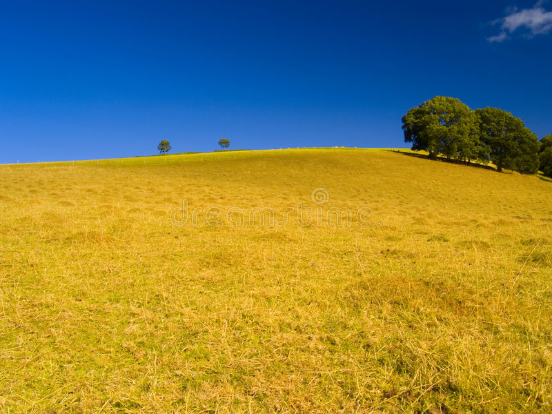Download Hill And Trees In The Summer Royalty Free Stock Photo - Image: 1212035