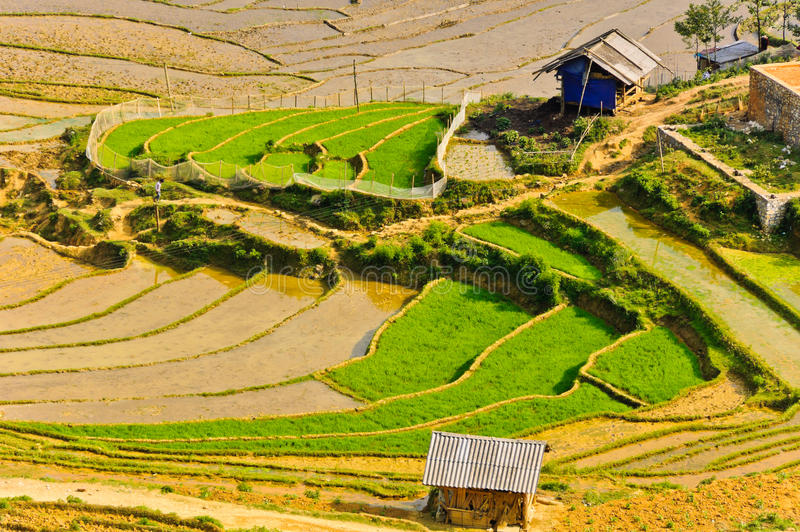 Hill tribe rice terraced fields. Rice terraced fields in Hmong village in Sapa, Vietnam royalty free stock photos