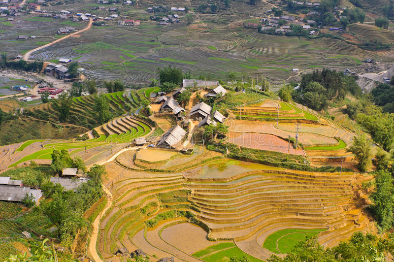 Hill tribe rice terraced fields. Rice terraced fields in Ta Van village in Sapa, Vietnam stock photo