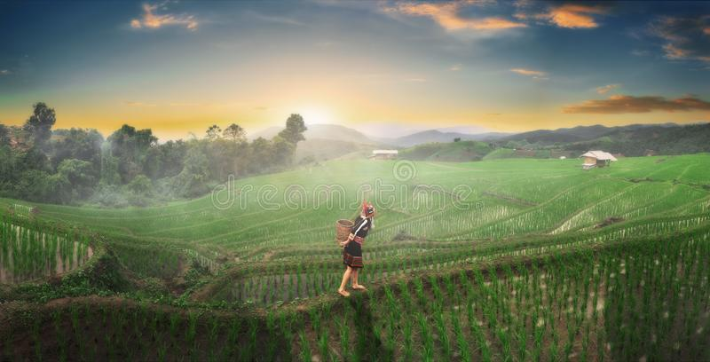 The hill tribe women in the landscape, mountains and fields have green trees at sunrise. Hill tribe woman in the landscape, mountains and fields have green trees royalty free stock photo