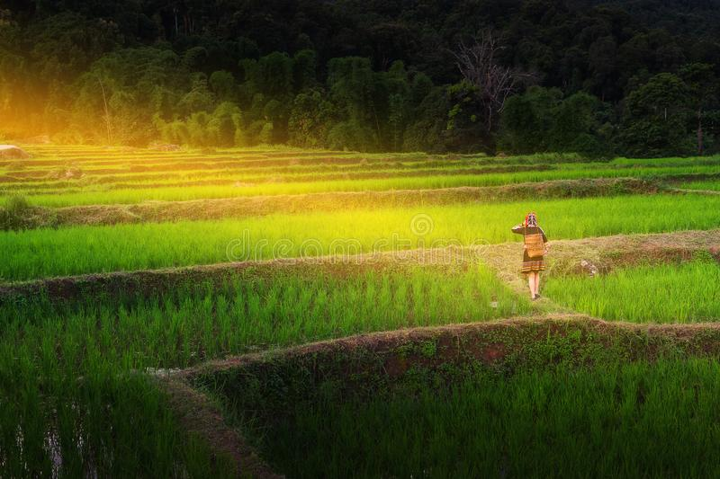 The hill tribe women in the landscape, mountains and fields have green trees at sunrise. Hill tribe woman in the landscape, mountains and fields have green trees royalty free stock photography