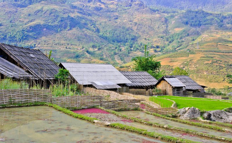 Hill tribe wooden houses. Landscape of rice crops in Sapa, Vietnam royalty free stock images