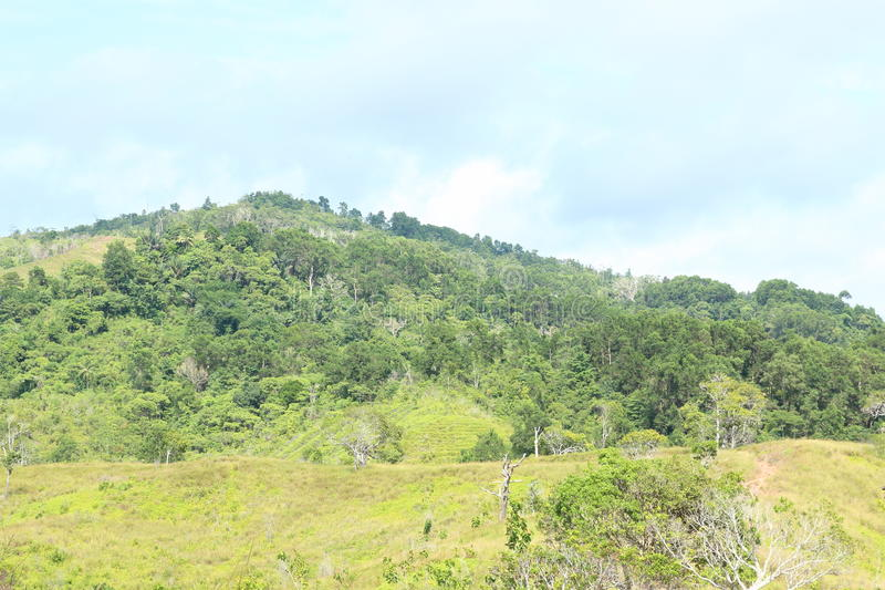 Hill. With tropical trees neer by Sorong (Papua Barat, Indonesia royalty free stock image