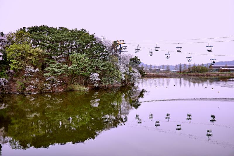A hill wtih cherry blossom trees and passengers on cable cars reflected on the lake stock images