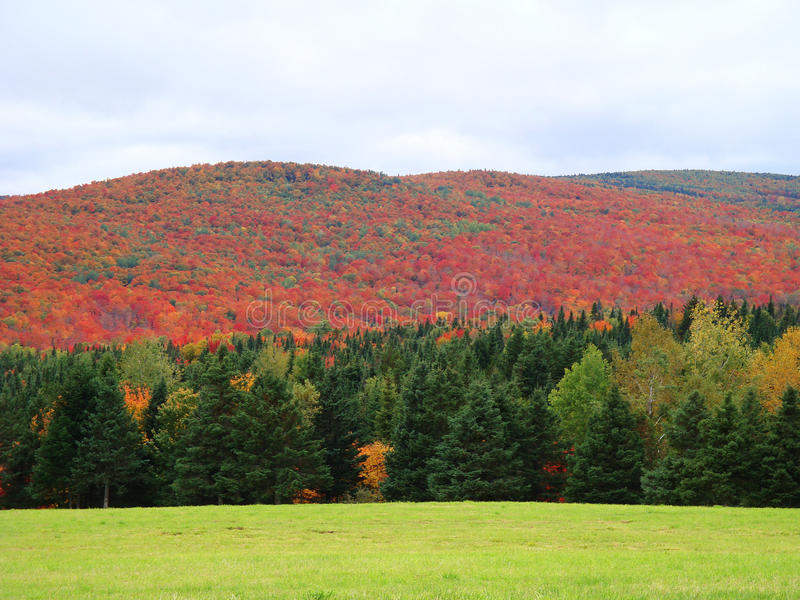 Hills of color offset by bright green foreground, Quebec Canada. Autumn foliage in deep oranges and reds contrast brightly against a foreground meadow in vivid royalty free stock images