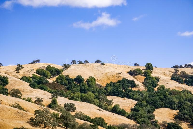 Hills covered in dry grass in Henry W. Coe Park State Park, San Francisco bay area, California stock photo