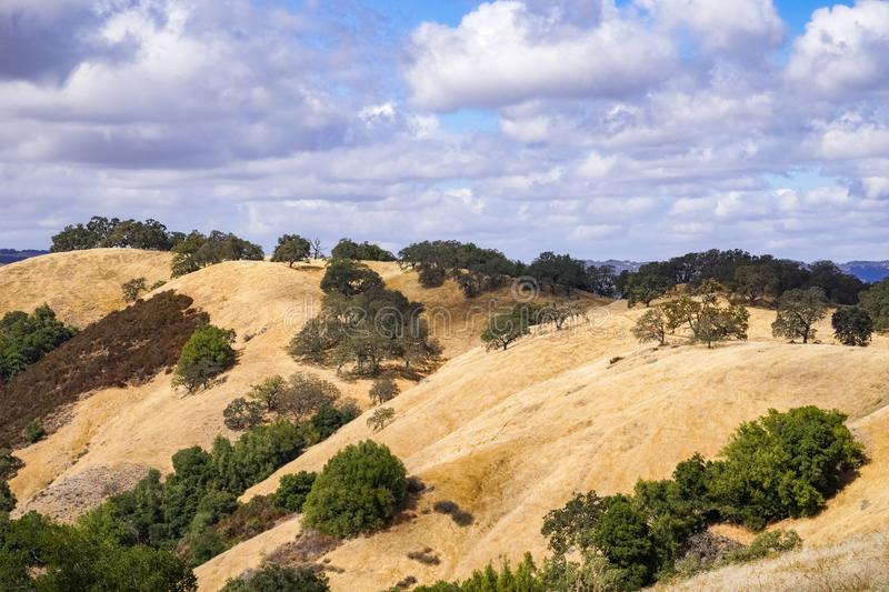 Hills covered in dry grass in Henry W. Coe Park State Park, San Francisco bay area, California royalty free stock photos