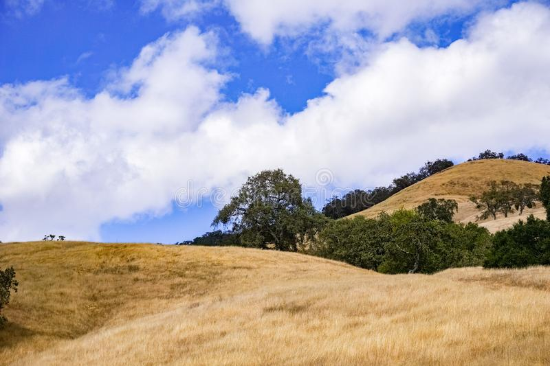 Hills covered in dry grass in Henry W. Coe Park State Park, San Francisco bay area, California royalty free stock images