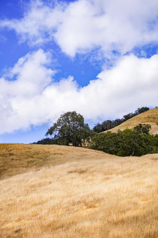Hills covered in dry grass in Henry W. Coe Park State Park, San Francisco bay area, California royalty free stock photography