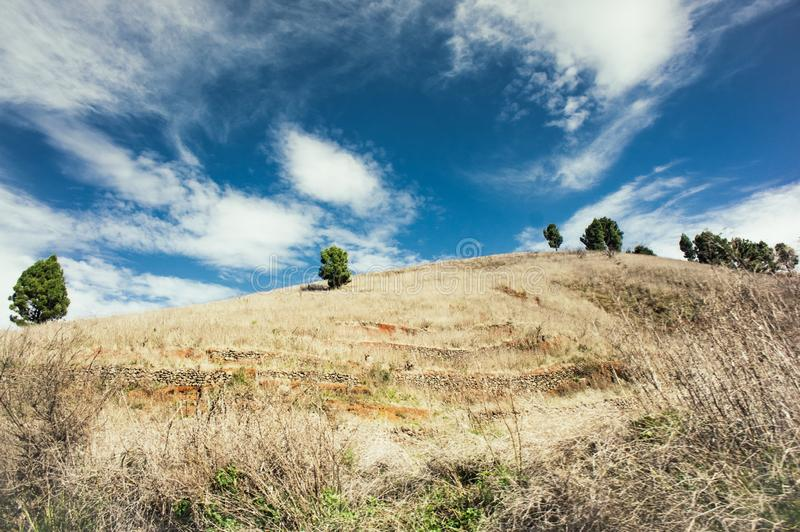 Hills covered with pale yellow grass, Tenerife, Canary Islands, Spain royalty free stock photography