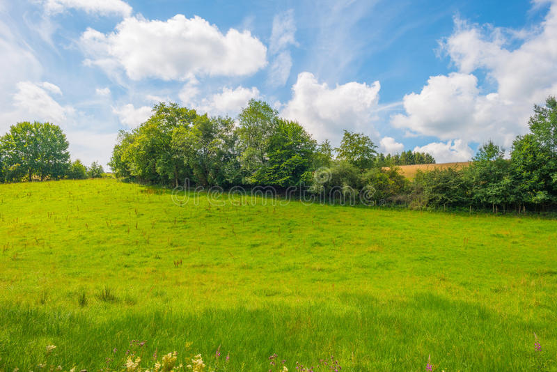 Hills of the Eifel National Park in sunlight. Hills of the Eifel National Park in summer stock image