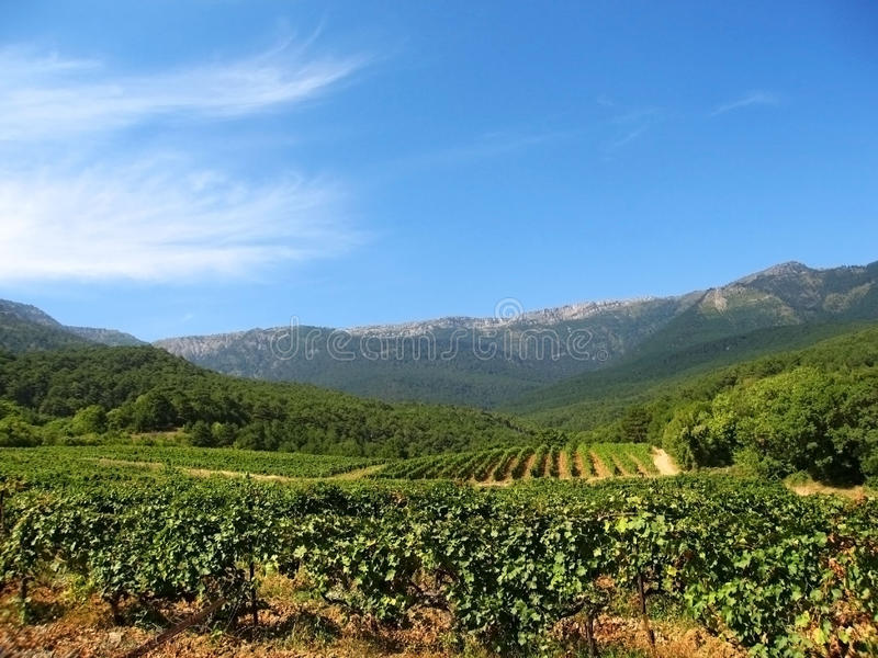Download Hills And Grapes Plantation Royalty Free Stock Image - Image: 11285376