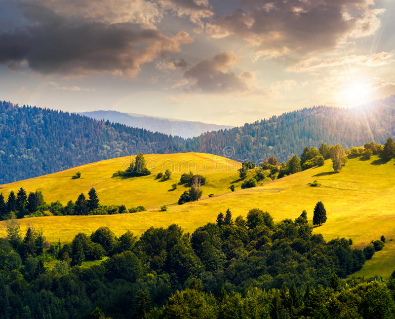 Hills with meadow among mountains forest at sunset. Bald hills with meadow and some trees among mountains with coniferous forest in evening light stock photo