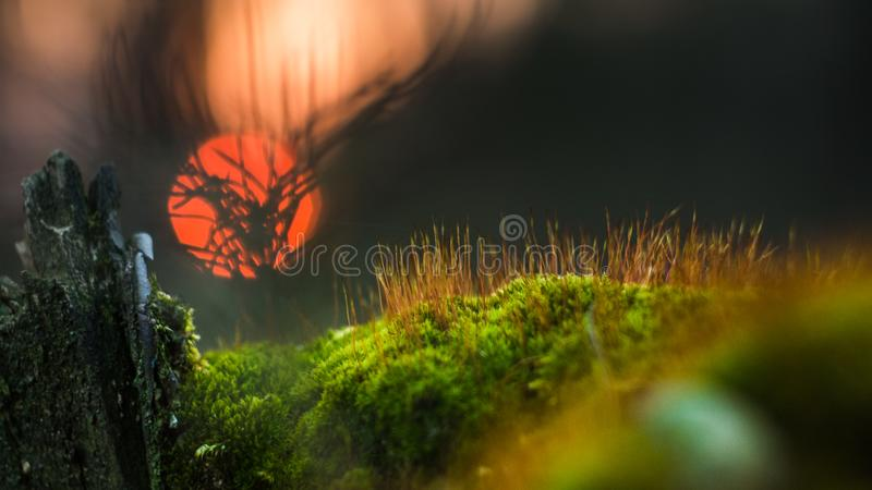 Hills of moss. Autumn walk in the forest before sunset.Macro world with moss hills big trees and strange shadows stock image