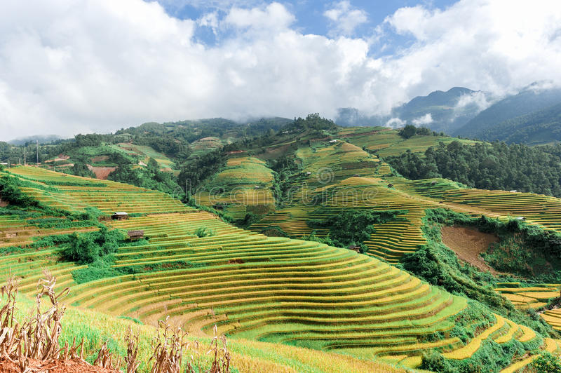 Hills of rice terraced fields. With cloudy sky stock photos