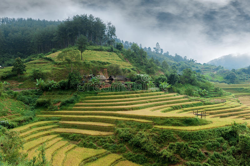 Hills of rice terraced fields. With mountains and clouds in Mu Cang Chai, Vietnam stock photography