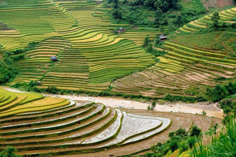 Hills of rice terraced fields. In Mu Cang Chai, Yen bay, Vietnam royalty free stock photos