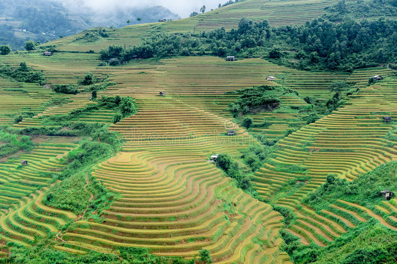 Hills of rice terraced fields. Hills of rice terraces fields in Mu Cang Chai, Vietnam royalty free stock image