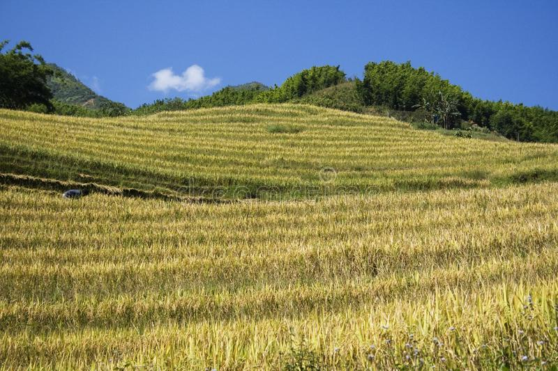 Download Hills and rice terraces stock photo. Image of farm, landscape - 7017446