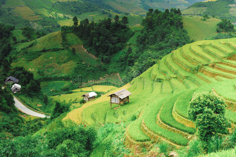 Hills of rice terraces and stilt house. In Mu Cang Chai, Vietnam royalty free stock photo