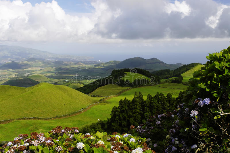 Download The Hills Of Sao Miguel Island, Azores, Stock Photo - Image of head, petal: 26392170