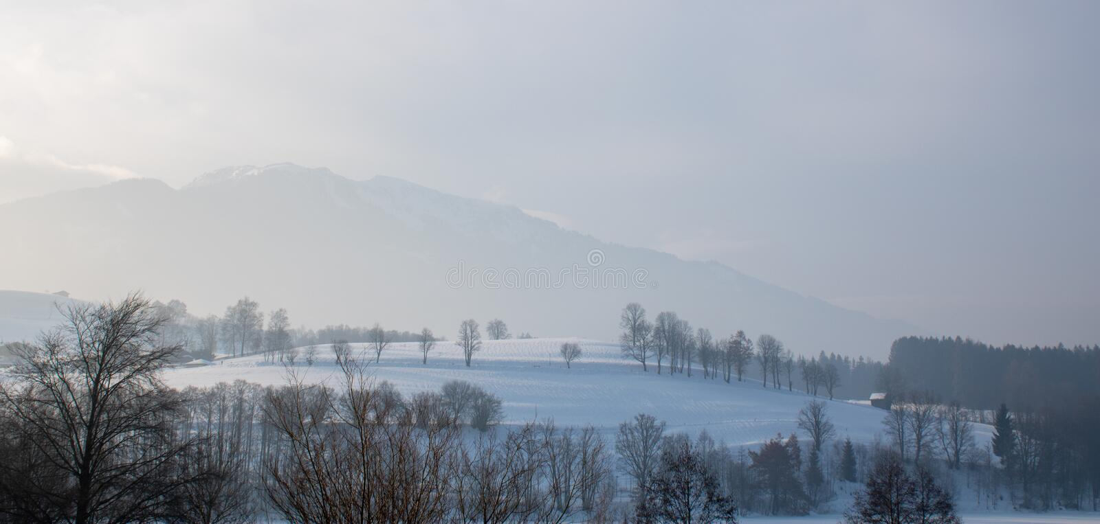 Hills with snow and trees royalty free stock image