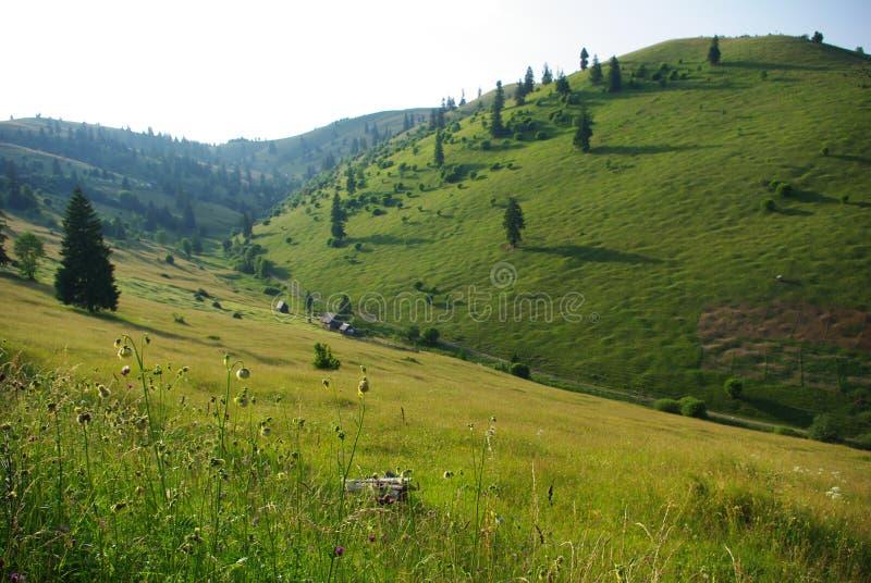 Hills in Transylvania royalty free stock image