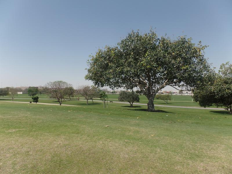 The hills and trees of Aspire Park, Doha, Qatar stock photo
