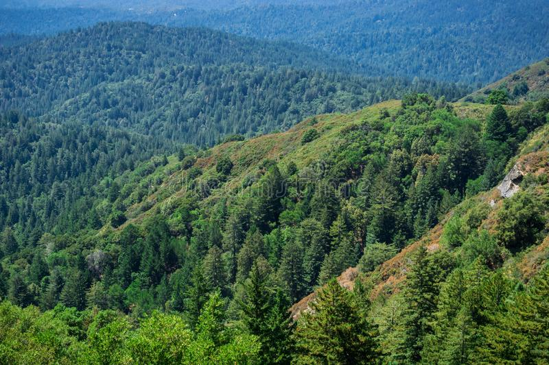 Hills and valleys covered in evergreen trees, Santa Cruz mountains, San Francisco bay area, California stock photography