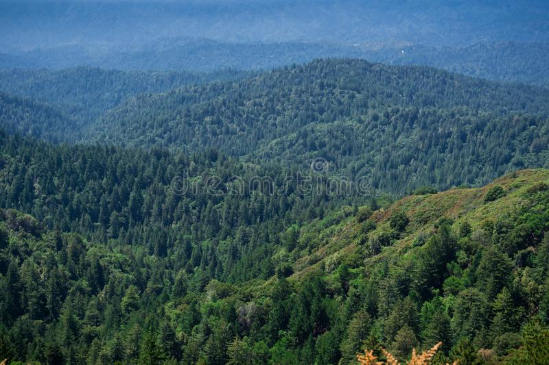 Hills and valleys covered in evergreen trees, Santa Cruz mountains, San Francisco bay area, California stock image