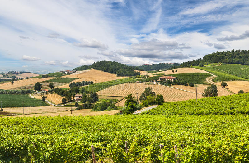 Hills and vineyards of Piedmont, Italy stock photos