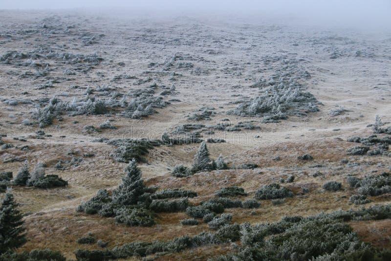 hillside Часть наклона покрыта с кустом с заморозком стоковое изображение rf